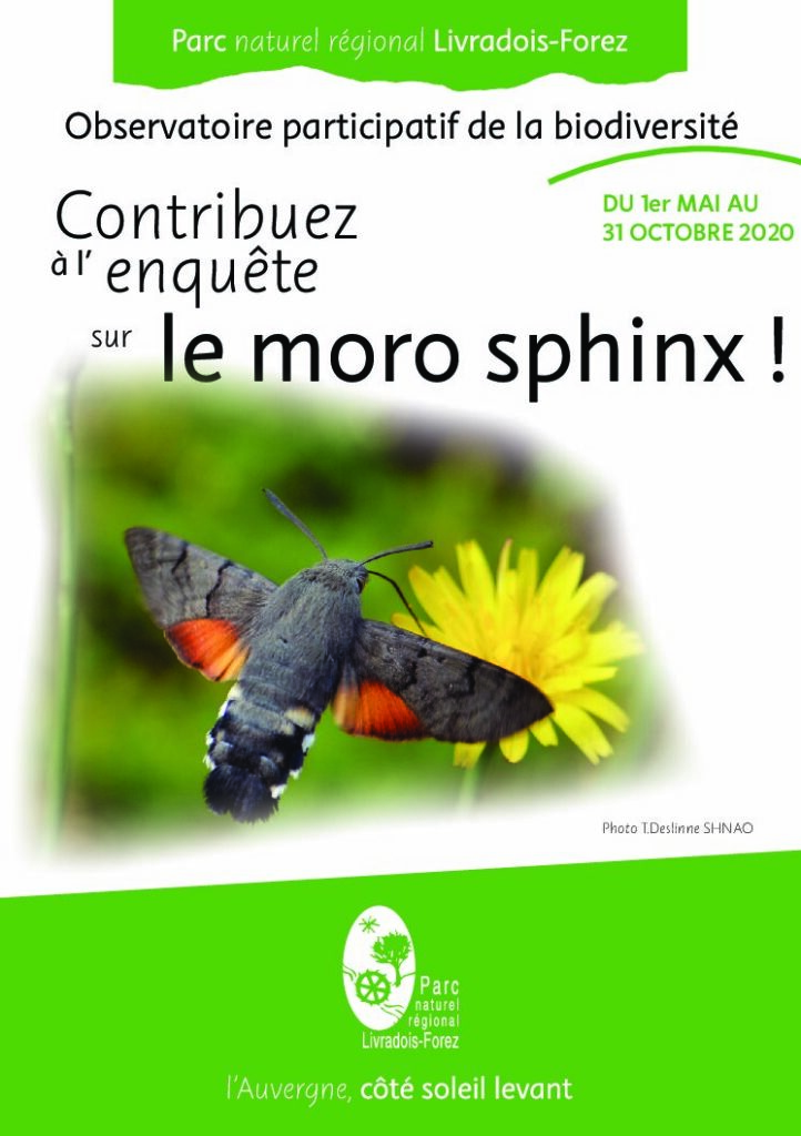 Flyer Moro Sphinx 2020